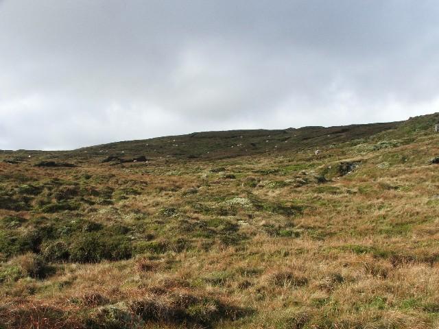 Sheep on Chapel Moor.