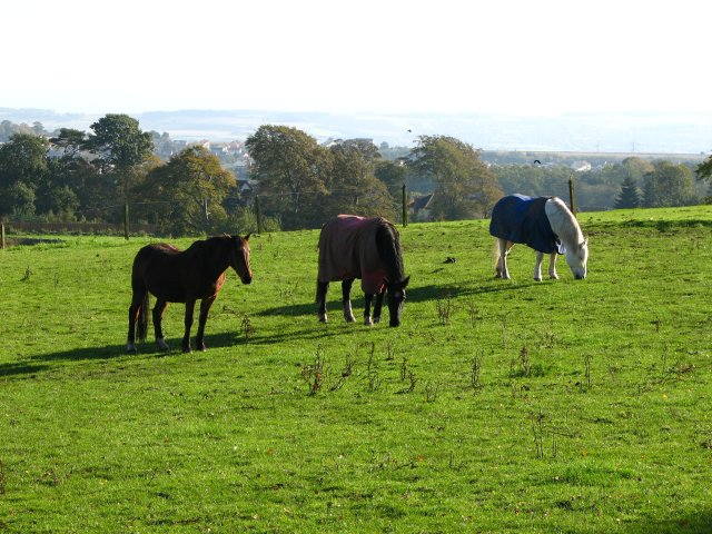 Horses at Meadowhead