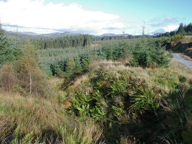 Kilmichael Forest