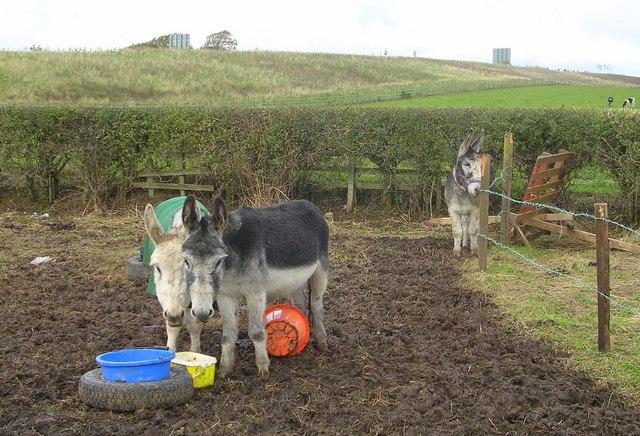 Donkey Paddock