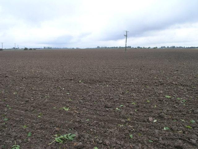 Big Brown Field