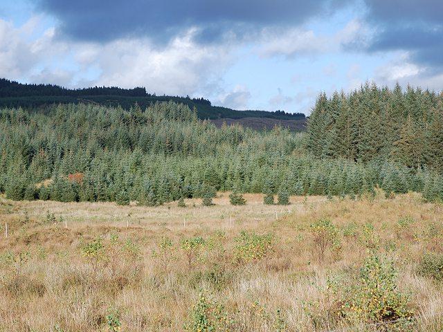 Natural woodland regeneration