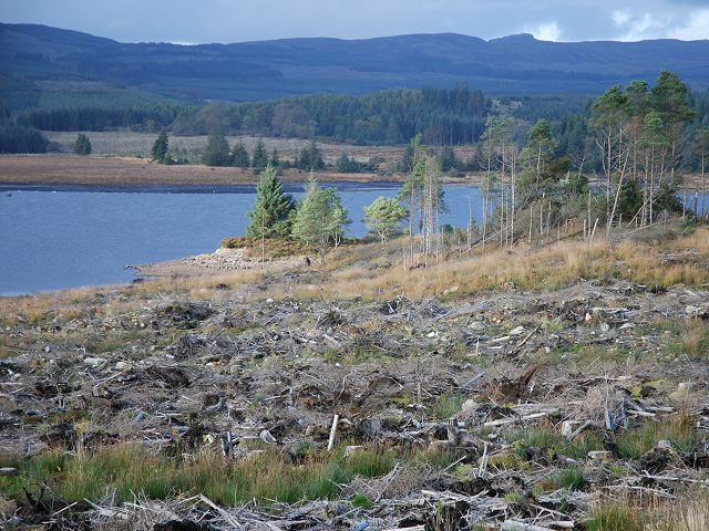 Scots pines at Loch Glashan