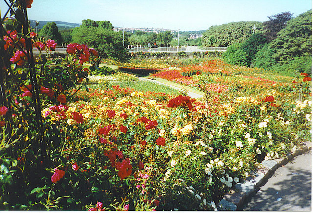 Rose Garden from the top of the Rose Hill