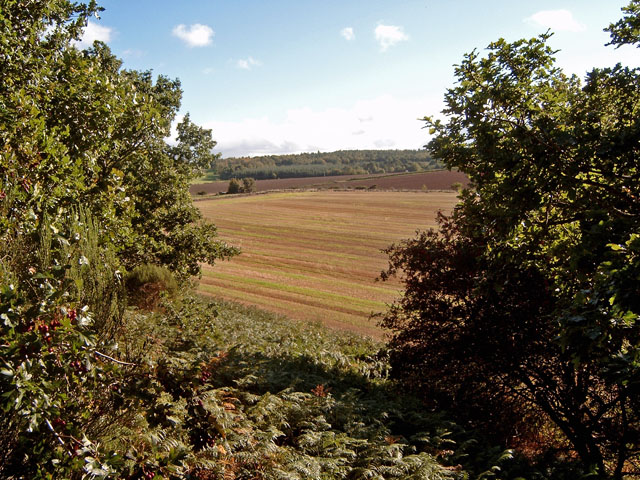 From the motte