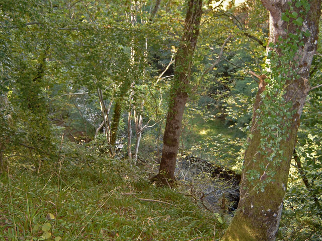 Gorge on the Muckle Burn