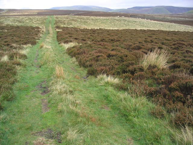 Track in the Cheviot Hills