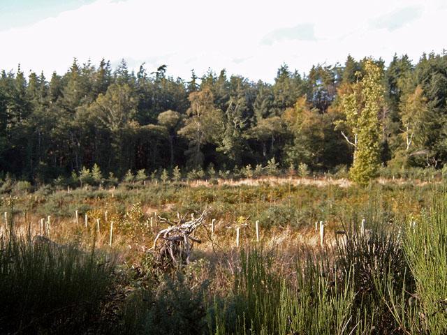 Craighead Wood