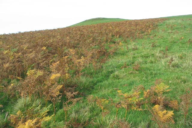 Bracken covered hillside