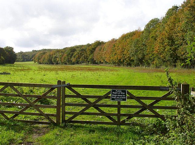 Mincendane Wood