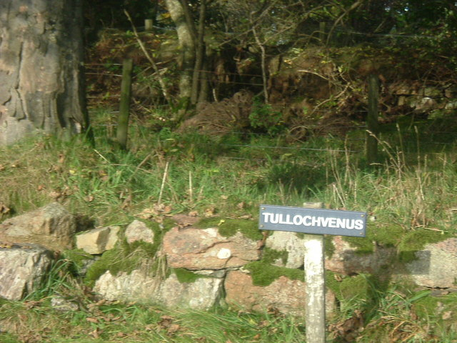 Tullochvenus