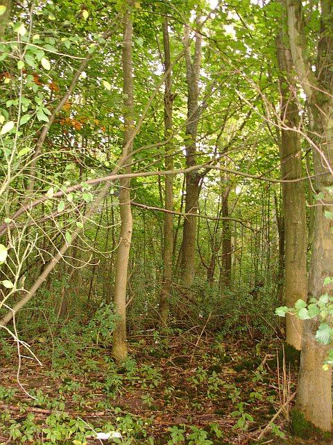 Deadman's Wood