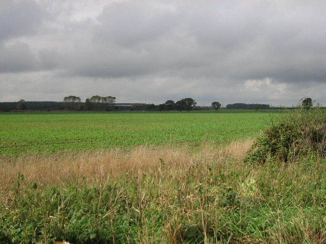 A Crop Alongside The A19