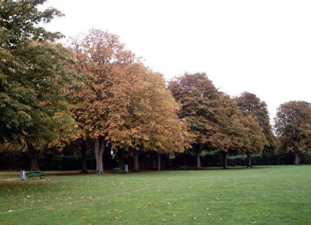 Horse Chestnuts - Fairview Park, Rayleigh