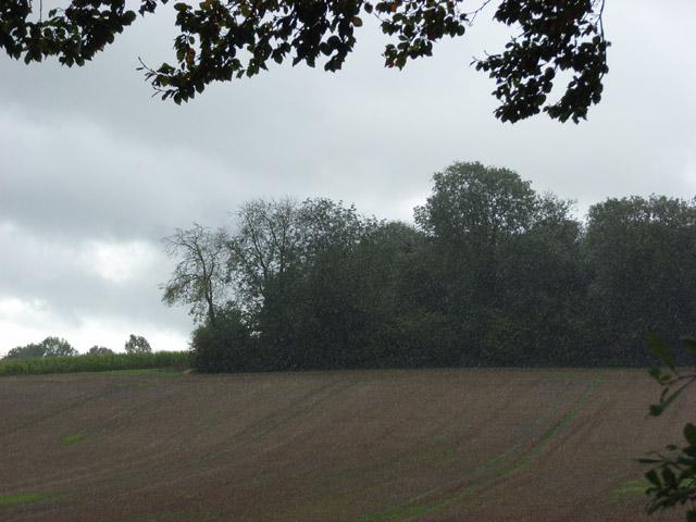 Copse, Woodlands Farm