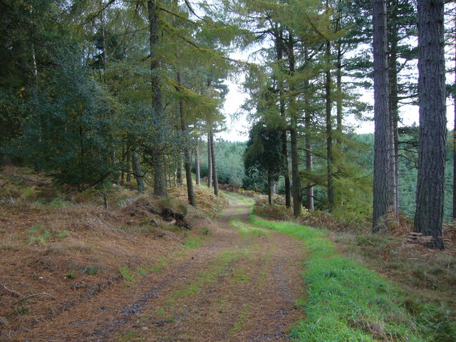 Forest track near the top of Shepherdskirk Hill