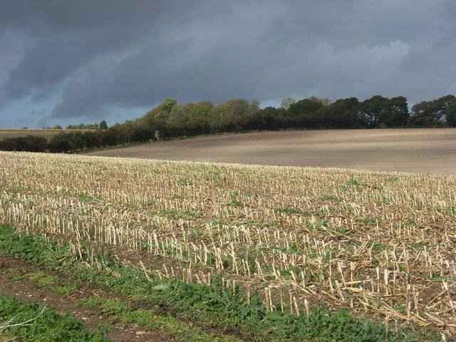 Stubble near Ogbourne St George