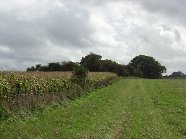 Farmland and copse, Mildenhall Warren