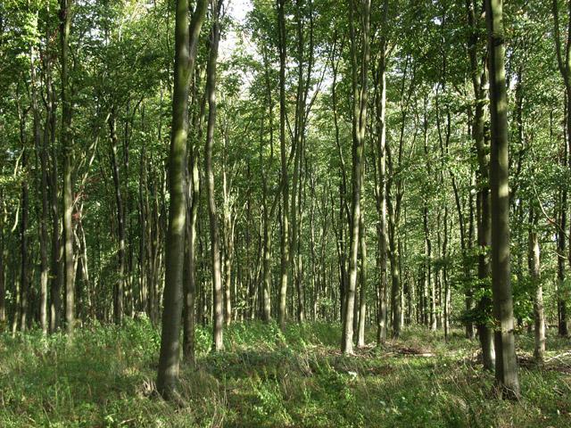 Moore's Wood