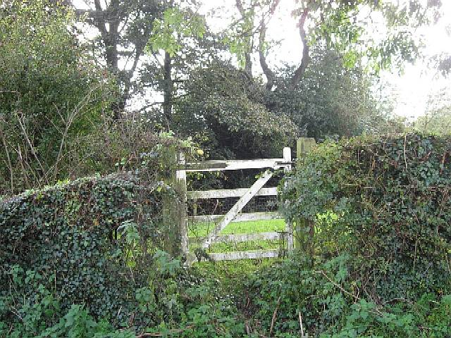Ivy, Gate And Wood