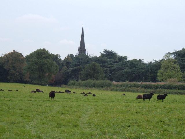 Clumber Church and Black Sheep