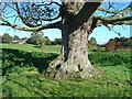 SE9955 : Site of village of Eastburn by Ian Lavender