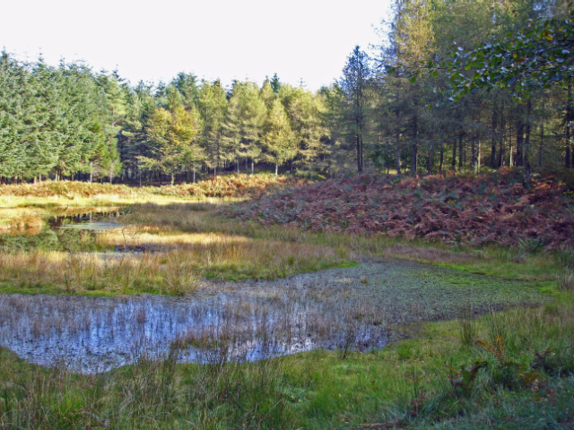 Woodland pool in the Esk valley