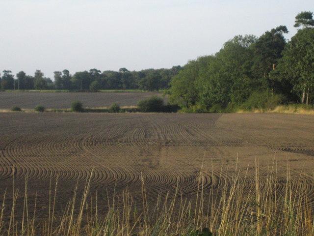 Fields from Newark Road near Norton Disney