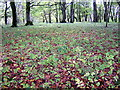 NX8167 : Forest Floor by Iain Thompson