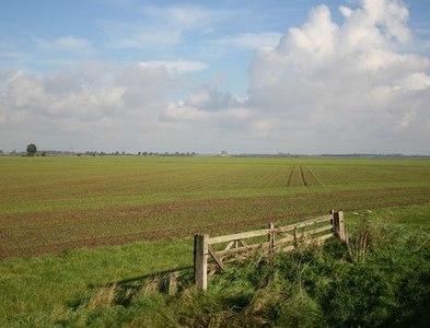 TF5260 : Croft Marsh by Richard Croft