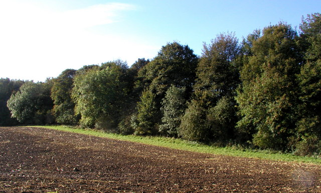 Birkby Nab Wood (south)