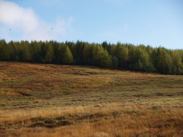 Forest plantation, Allt Ghlas