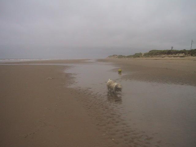 Wet dog on Formby beach