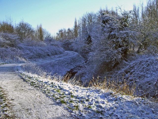 Path beside Chorlton Brook, Ivy Green