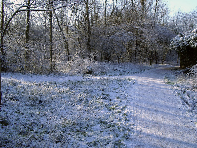 Junction of paths, Chorlton Ees Nature Reserve