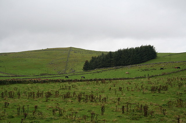 Copse to the nor'west of Lesmoir