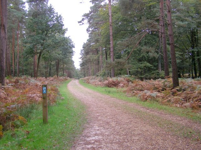 Cycle route through Denny Lodge Inclosure, New Forest