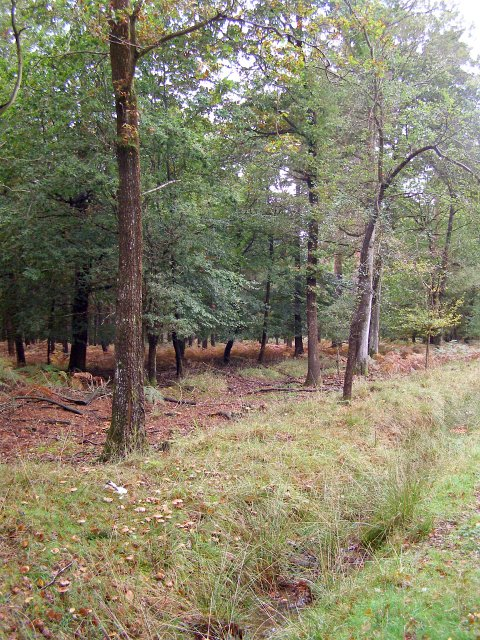 Trees in the Denny Lodge Inclosure, New Forest