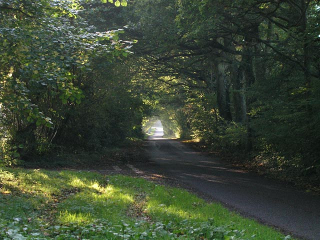 Tree-tunnelled road with the first autumn mist