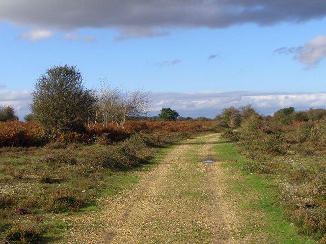 Gravel track on Ocknell Plain, New Forest