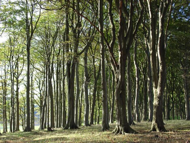 Peaks Wood