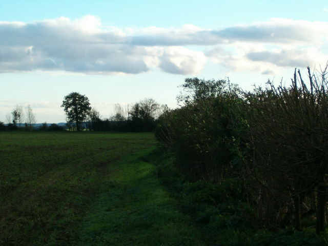Along the Hedgerow