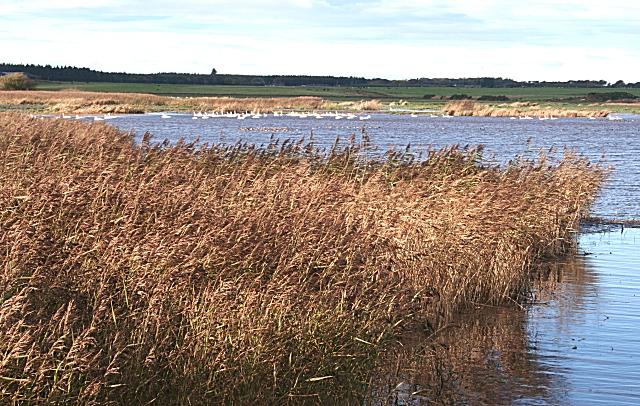 Loch of Strathbeg