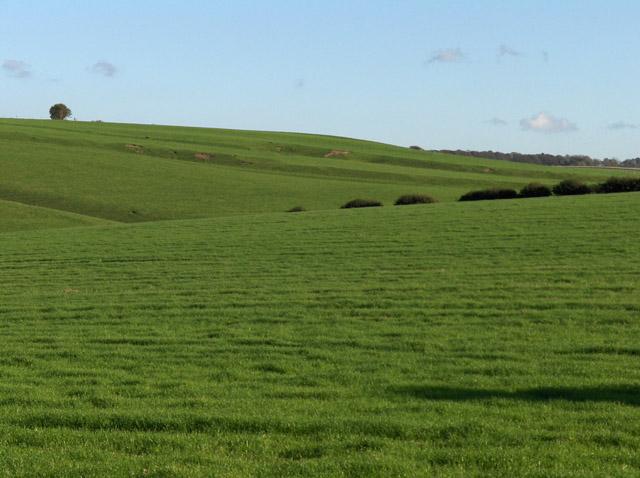 Farmland near Aldbourne