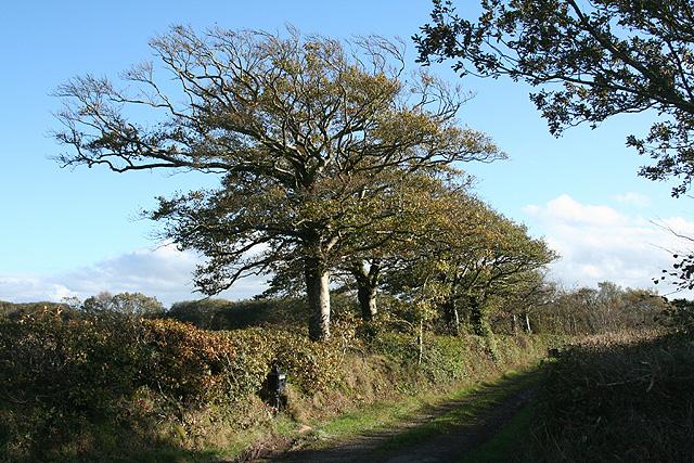 Chulmleigh: on Long Moor