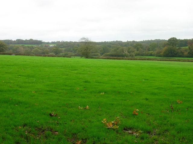 Weald near Horam