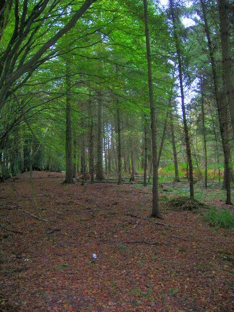 Great Dern Wood