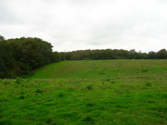 Coneyburrow Wood