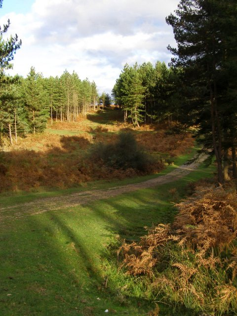 Long shadows in Slufters Inclosure, New Forest