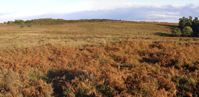 Panoramic view across heathland north of Slufters Bottom, New Forest